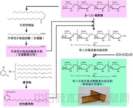 生物塑料的制造流程.-日本研究人员开发出以裸藻为主要原料的微生