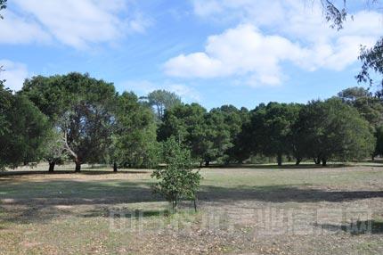 同样是蓝天白云,绿树成林