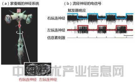 家蚕蛾的运动系统是触发器响应