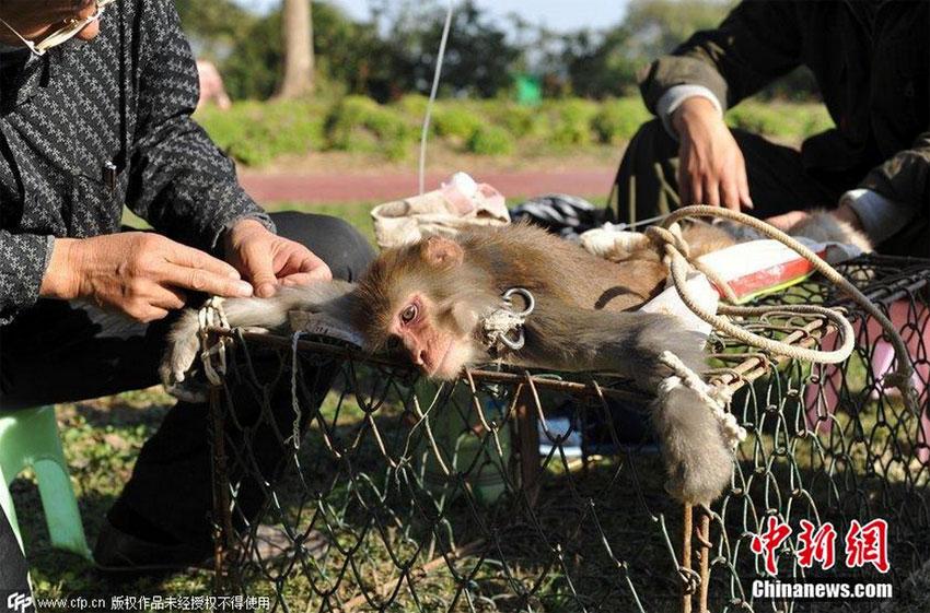 组图:猴子腹泻被五花大绑挂吊瓶 财经