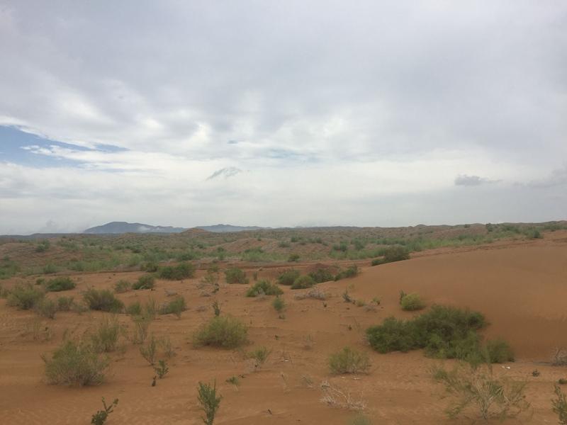 腾格里沙漠巨网般的麦草方格里布满葱茏的沙生植物。