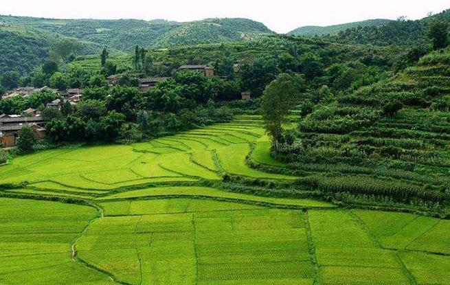 全国已播农作物一点五亿亩 春耕瞄准高质量发展