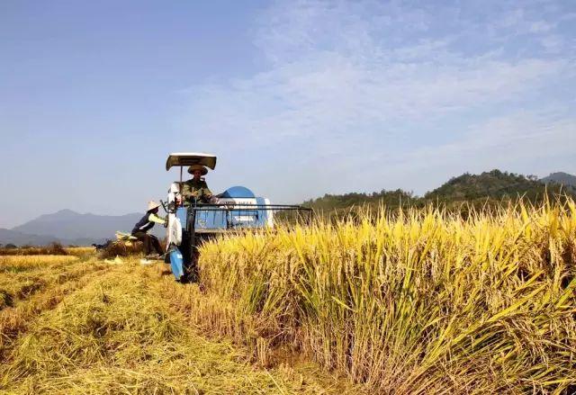 农民持续增收:人均可支配收入4600元 实际增长6.9%