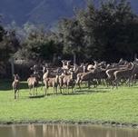 新西兰新西兰最大鹿企盼扎根中国市场