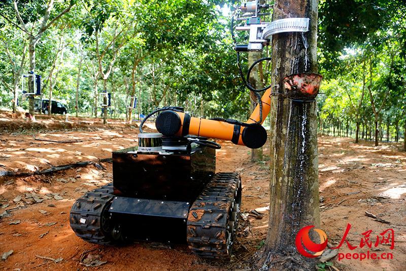 科技赋能 割胶机器人市场潜力巨大