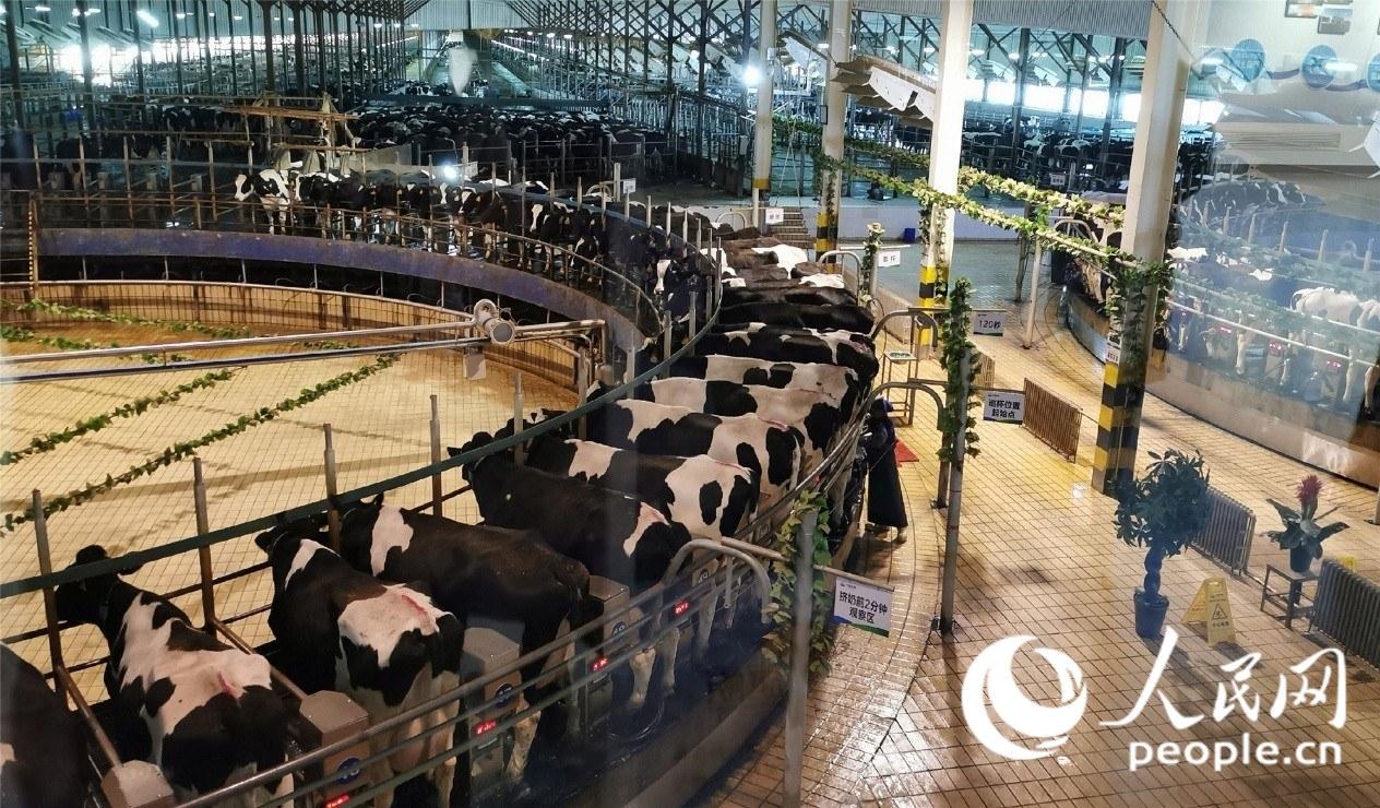 君乐宝:生产出让人民群众满意、放心的高品质乳业产品