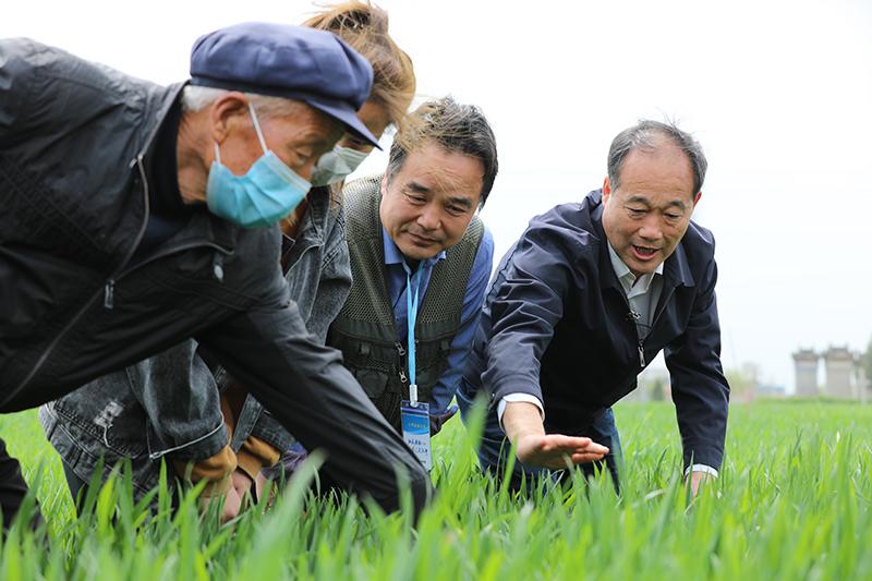 全國10省份小麥條銹病發生面積1200萬畝農業農村部部署防控