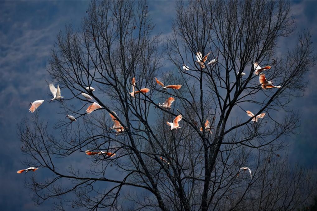 國際生物多樣性日:呵護自然共同守護地球家園