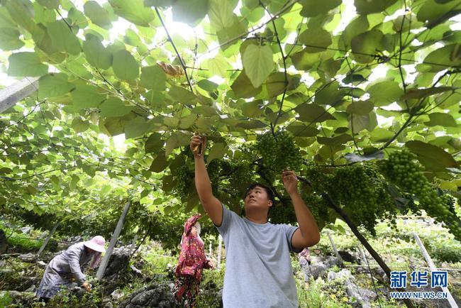 農業農村部:把產業和就業作為守住不發生規模性返貧底線的治本之舉