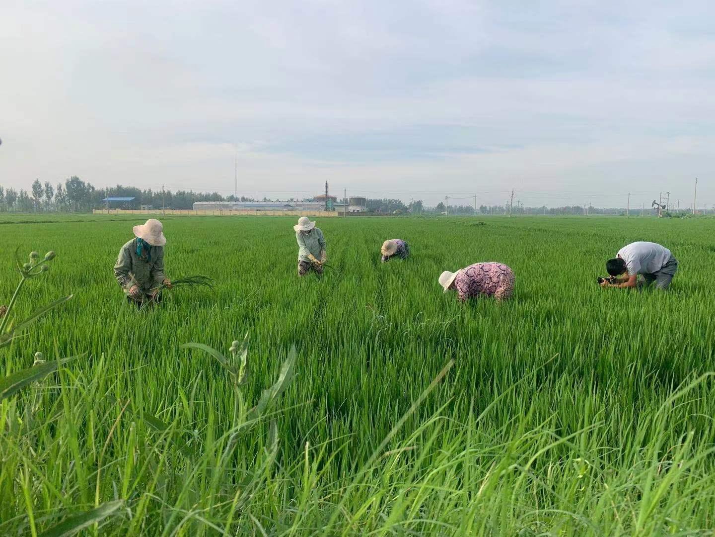 第四个中国农民丰收节:浓墨重彩绘就美景 秋收唱响大地赞歌