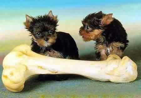 动物教你如何做人 - 巴依 - 巴依欢迎您