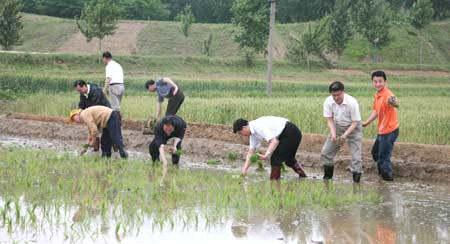 中国驻朝大使驾驶插秧机 参加朝鲜支农劳动(图