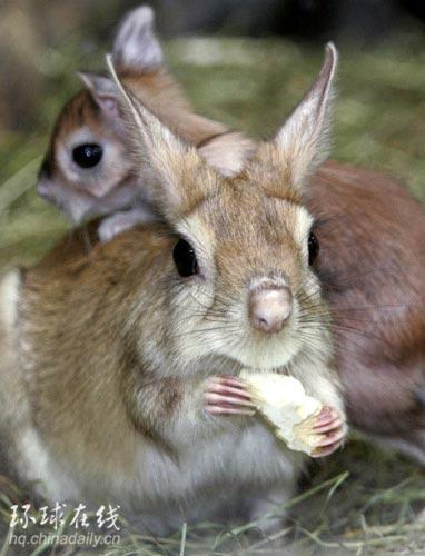 惊艳瞬间――日本东京动物园内的野兔妈妈与刚出生不久的