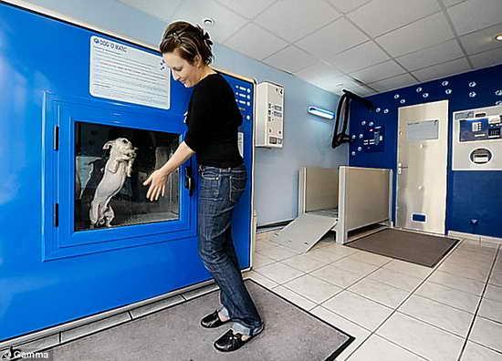 图]法国发明自动洗狗机 半小时完成洗澡过程 (