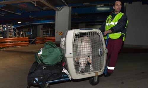 行李箱如何被送上飞机