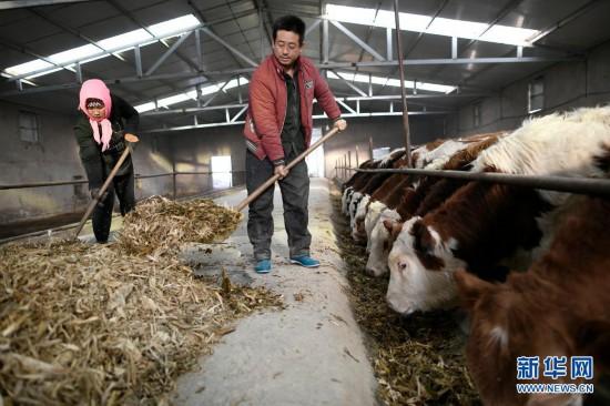 兑现庄严理睬铸就汗青伟业——从《人类减贫的中国实践》白皮书看中国脱贫攻坚伟大过程